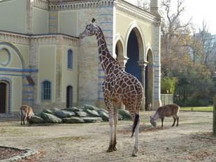 Kritik an Giraffenhaltung