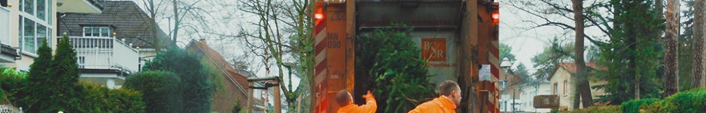 BSR-Mitarbeiter werden Tannenbäume in ein Müllfahrzeug.